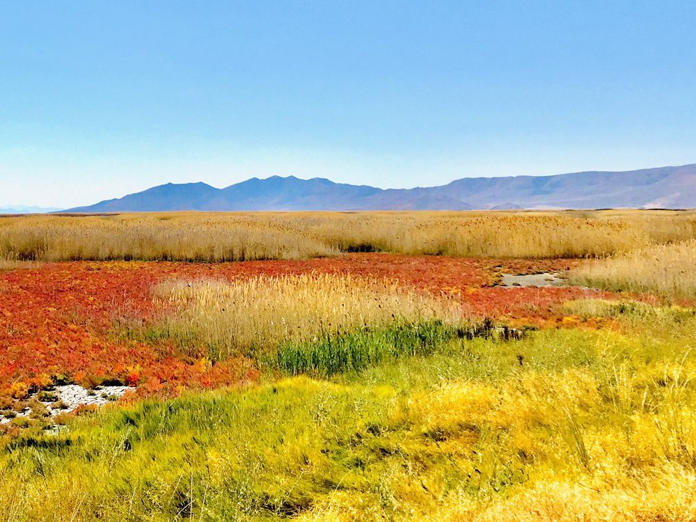 Bear River Migratory Bird Refuge: 2155 W Forest St, Brigham City, UT