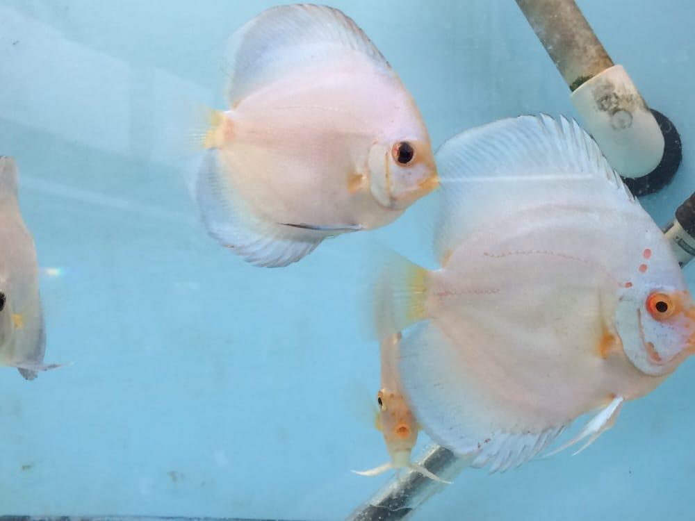 Houston Aquarium Warehouse: 12999 Murphy Rd, Stafford, TX