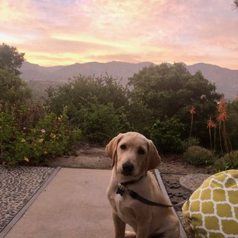 Karma Dog Training - 314 Photos & 486 Reviews - Pet Training