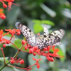 Photo Of Victoria Butterfly Gardens   Brentwood Bay, BC, ...