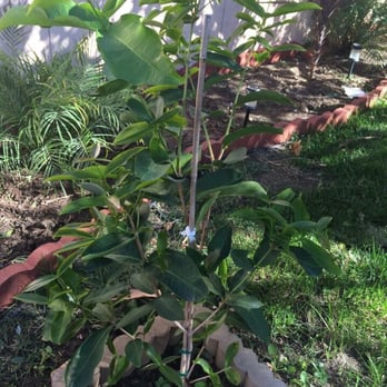 Photo Of Champa Nursery El Monte Ca United States Mn Xanh