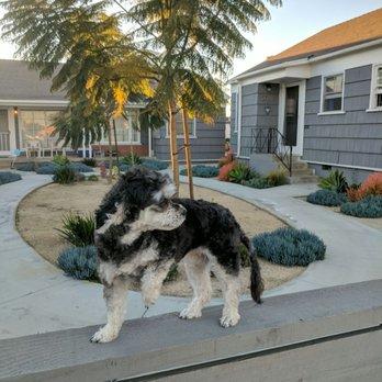 South bark dog wash 136 photos 379 reviews pet groomers photo of south bark dog wash san diego ca united states mega solutioingenieria Choice Image