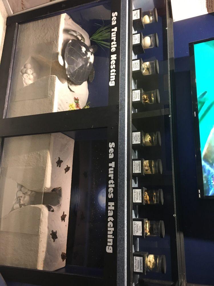 Navarre Beach Sea Turtle Center: 8740 Gulf Blvd, Navarre, FL