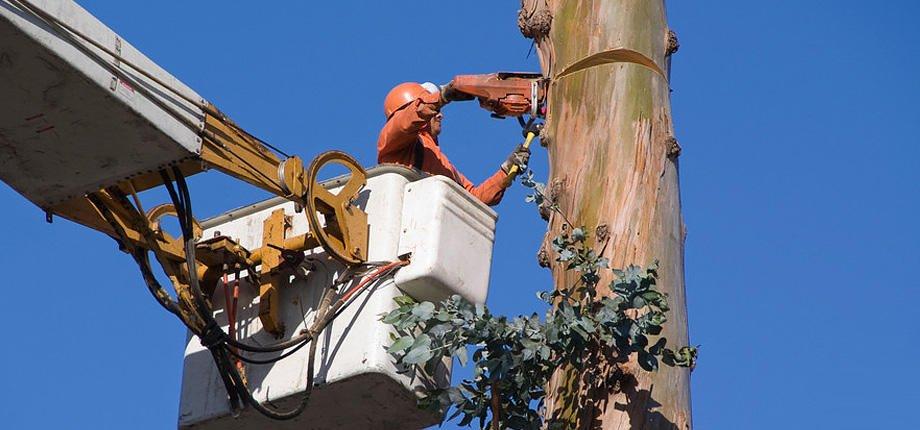 Ranger Tree Services: 708 S 9th Ave, Eldridge, IA