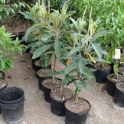 Photo Of Queen Creek Tropicals Plant Nursery Az United States