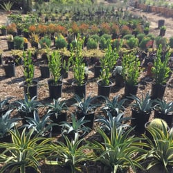 Photo Of Curby S Nursery Temecula Ca United States Waterwise