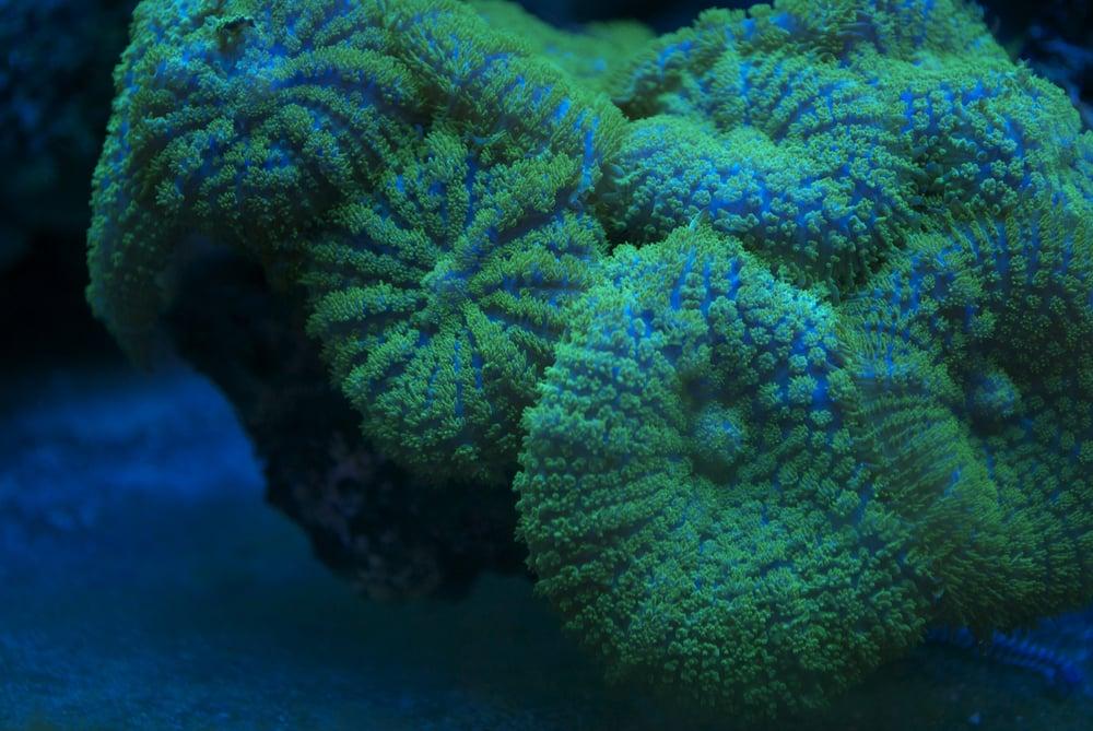 Aquarium World: 1512 Meetinghouse Rd, Boothwyn, PA