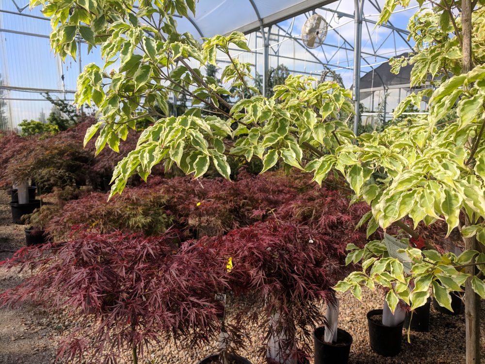 Photos For Foster S Nursery Tree Farm