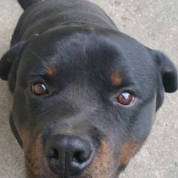 Guardian Rottweilers 12 Photos Pet Stores 1190 N Rd 575 W