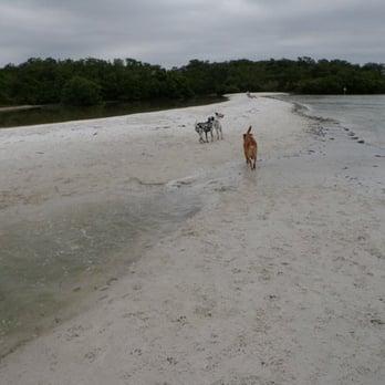 Dog Beach 37 Photos 10 Reviews Beaches 8800 Estero Blvd