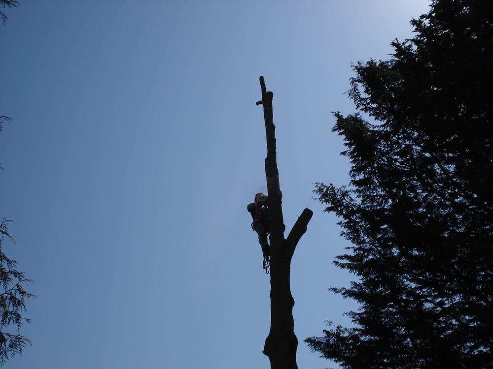 Chopping Block Tree Service: Lake Stevens, WA