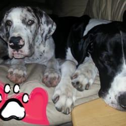 Pet Pals Veterinary Clinic logo