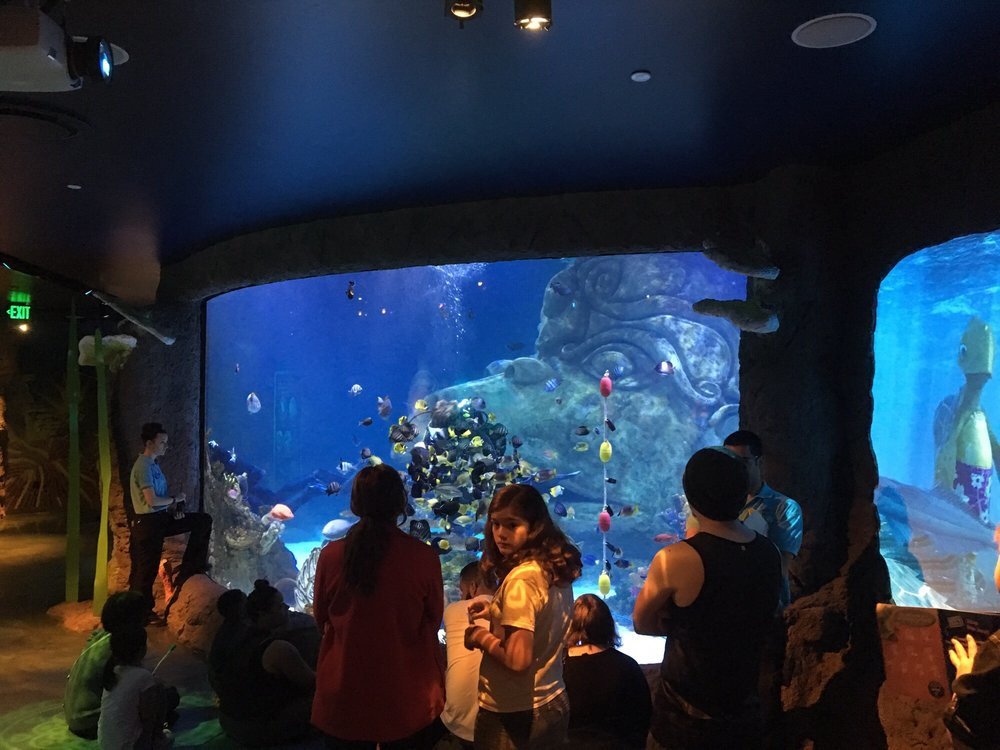 Photos for SEA LIFE Orlando Aquarium - Yelp