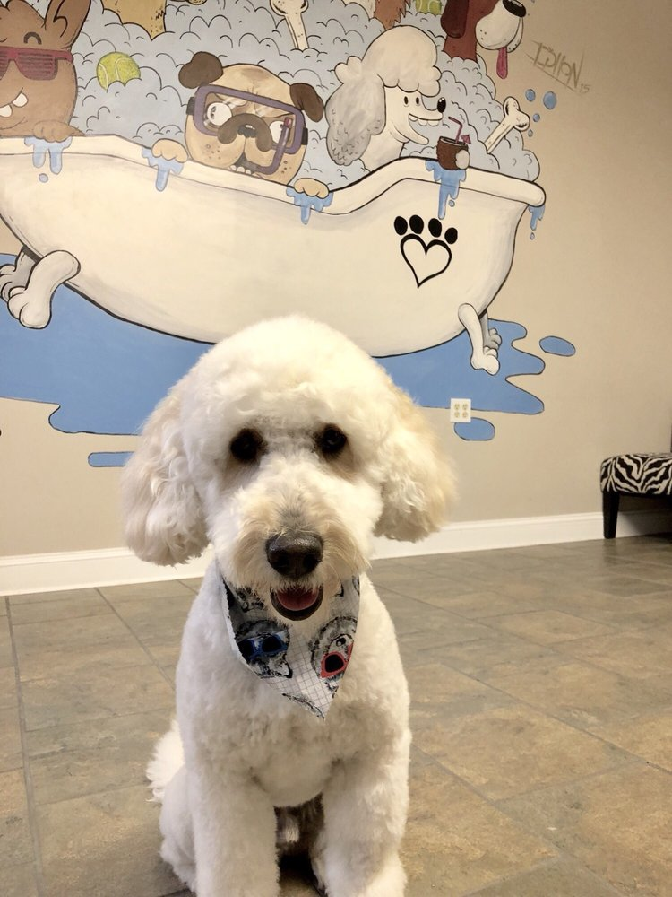 Croton's Pampered Pet  Grooming Salon and Boutique: 35 North Riverside Ave, Croton-on-Hudson, NY