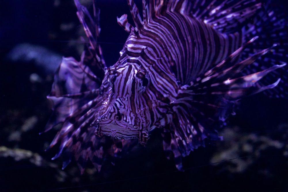 North Carolina Aquarium at Pine Knoll Shores: 1 Roosevelt Dr, Pine Knoll Shores, NC