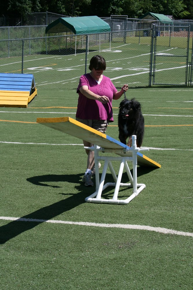 Dog Agility Training Mooresville Nc