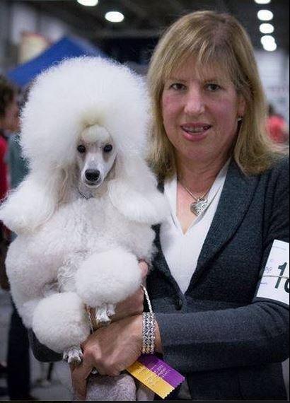 Dog Grooming School Ct