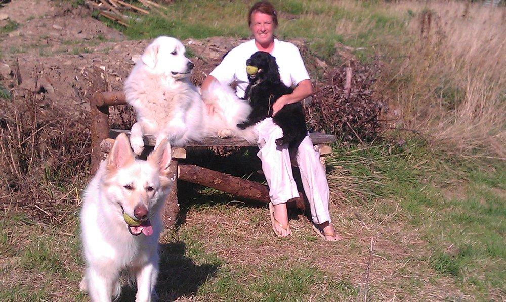 Debbie Dog Grooming Liskeard