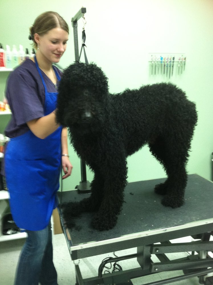 Dog Grooming Chatham