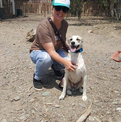 Austin Dog Rescue Phone Number