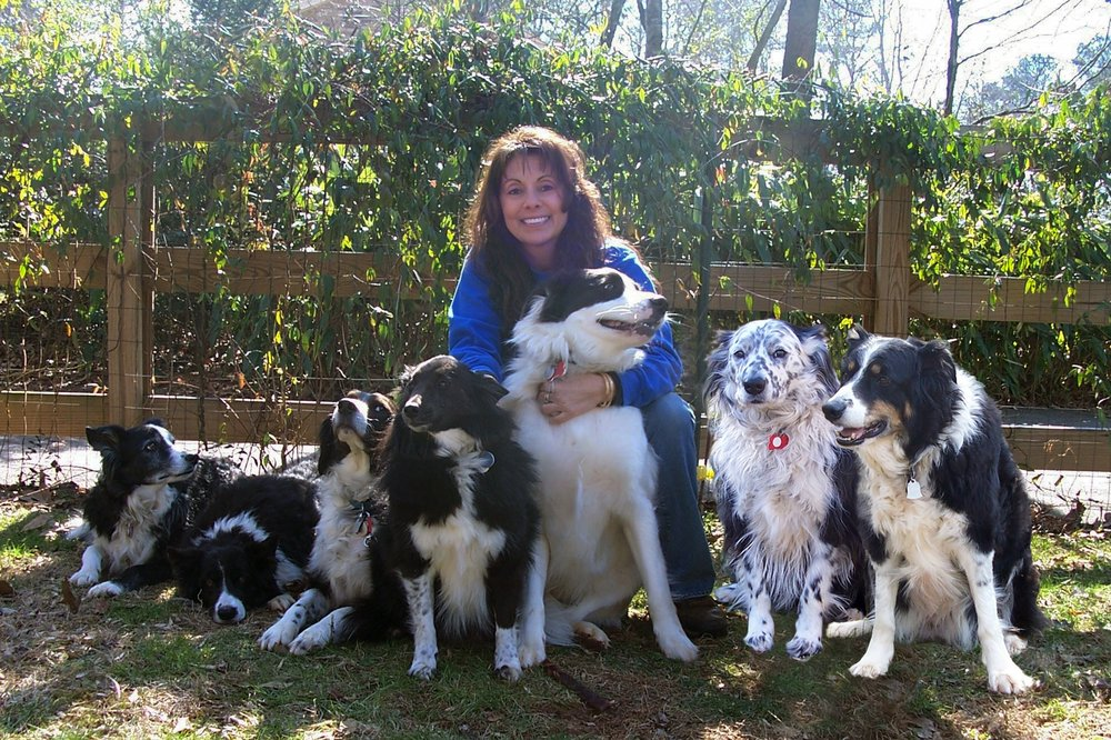 Atlanta Dog Trainer Pet Resort