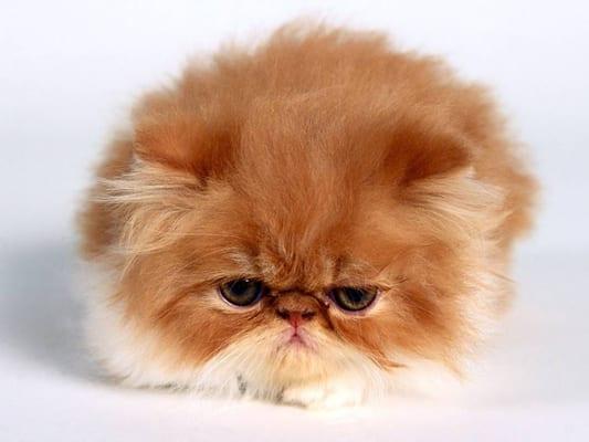 Cat H.