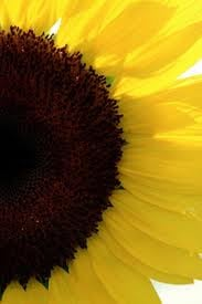 Sun F.
