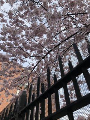 Sakura W.