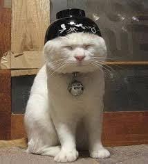 Meow S.