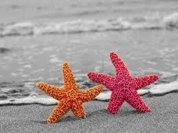 Starfish W.