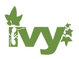 Ivy S.