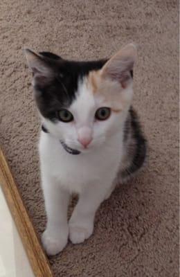 Cat C.
