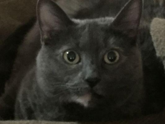 Cat I.