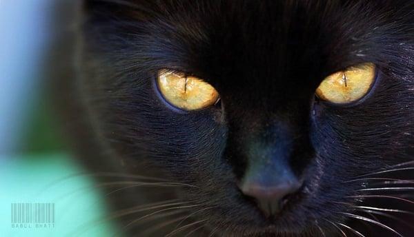 The Black Cat C.