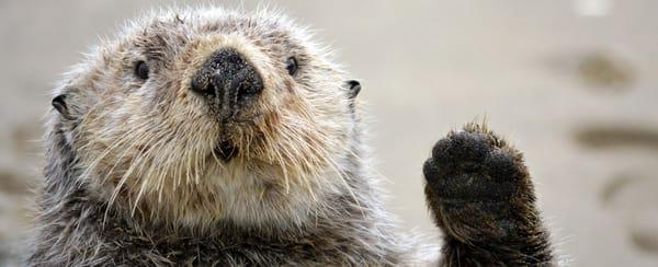 OtterBot G.