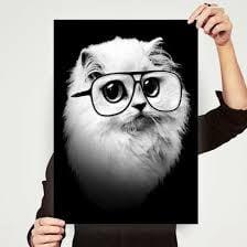 Anonymous Cat ..