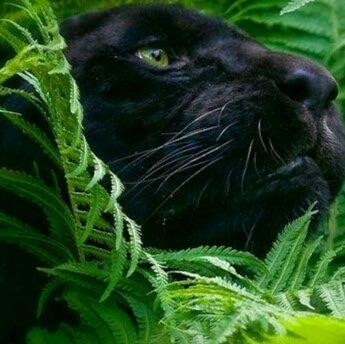 Cat J.