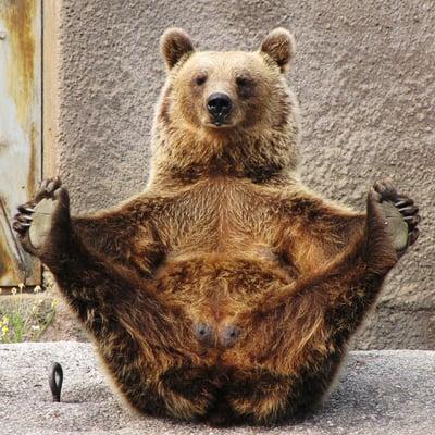 Pooh B.