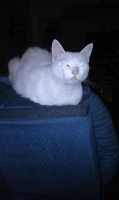 Cat A.